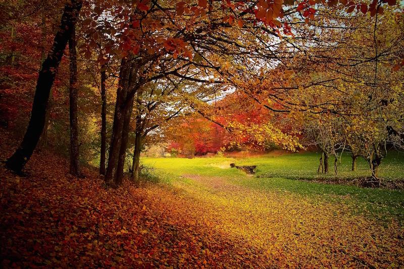 Herbstbild Wald